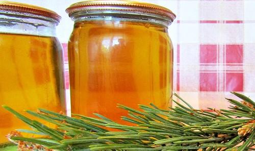 Сосновый мёд из побегов сосны